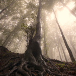Tree with roots in enchanted forest